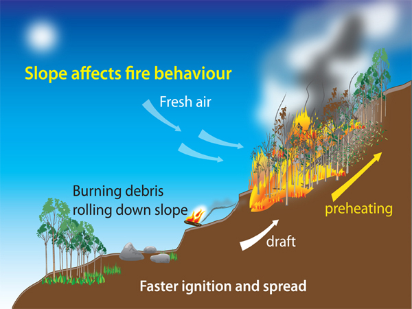 Diagram showing how slope affects fire behavior, burnig fire uphill fed by draft and preheating rolls downslope,causing feaster ignition and spread